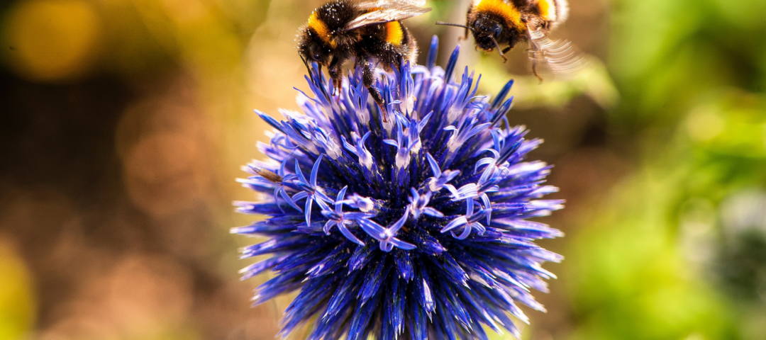 Bijenvriendelijke tuin